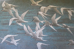 Tern Group III